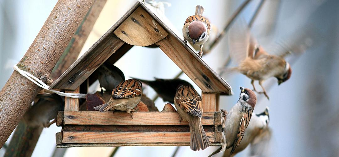 Vildtfuglefoder tema billede